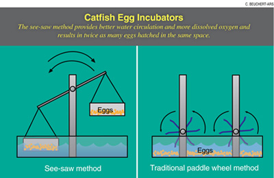 Graphic: Catfish Egg Incubators