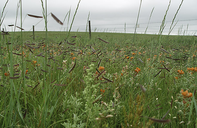 A variety of flowers and grasses growing on a prairie