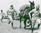 Training pack mules in 1942