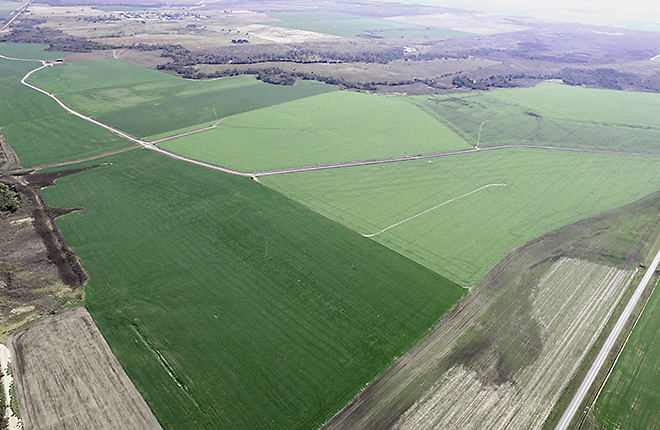 Aerial view of an LTAR field planted with wheat and canola