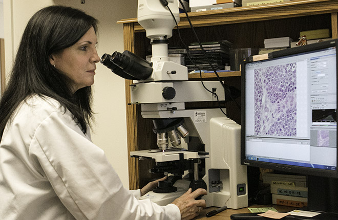 ARS scientist examines tissue samples on a computer screen