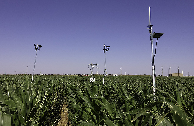 Wireless infrared thermometers in a corn field