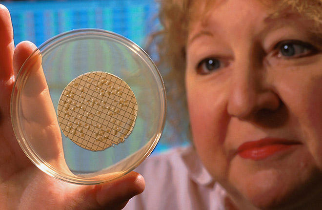 ARS technician looking at a culture growing in a petri dish