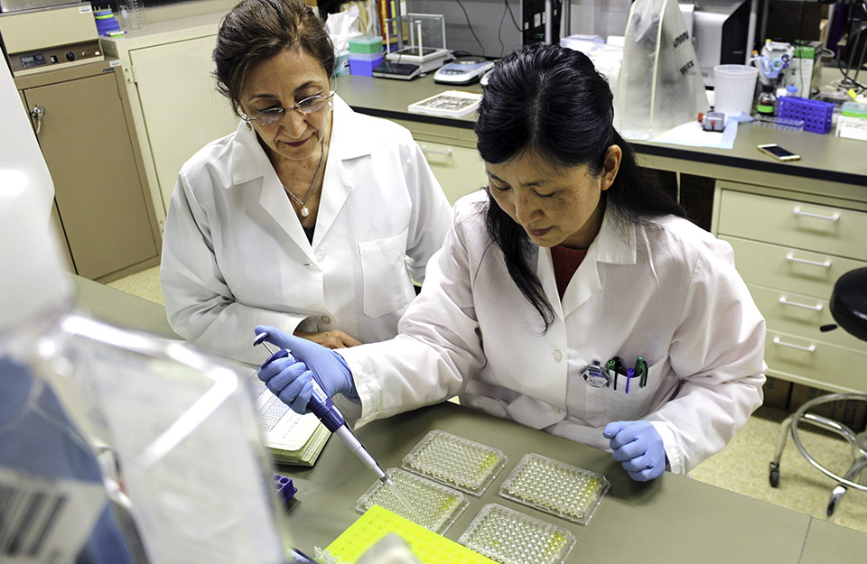 Researchers preparing samples in the lab