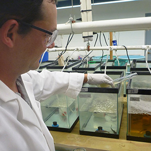 Scientist adding a solution into a fish tank.
