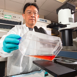 Scientist in laboratory holding container of human THP-1 cells.
