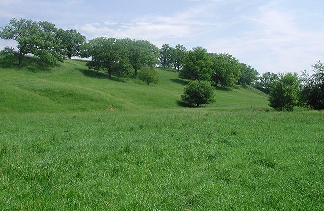 Farm pasture.