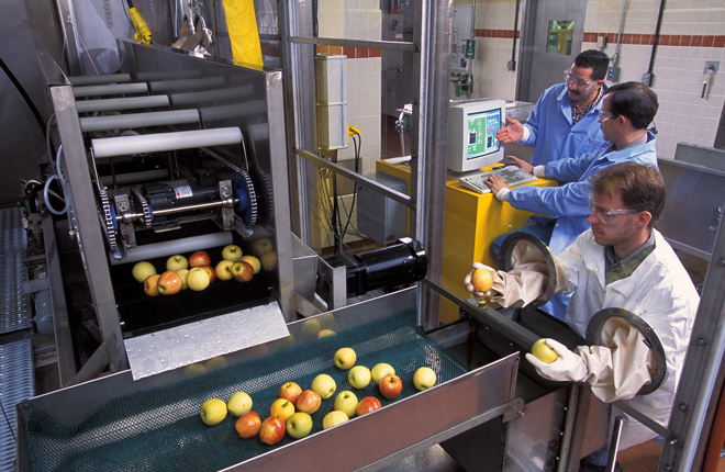 Workers washing apples with machinery.
