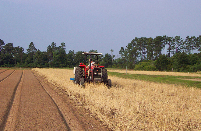 Conventional tillage beside strip tillage.