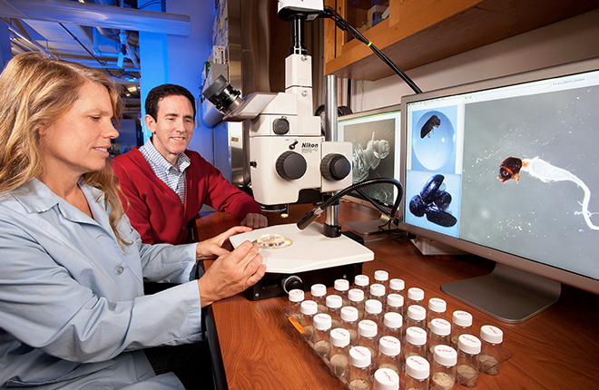 Scientists review coffee berry borer images.