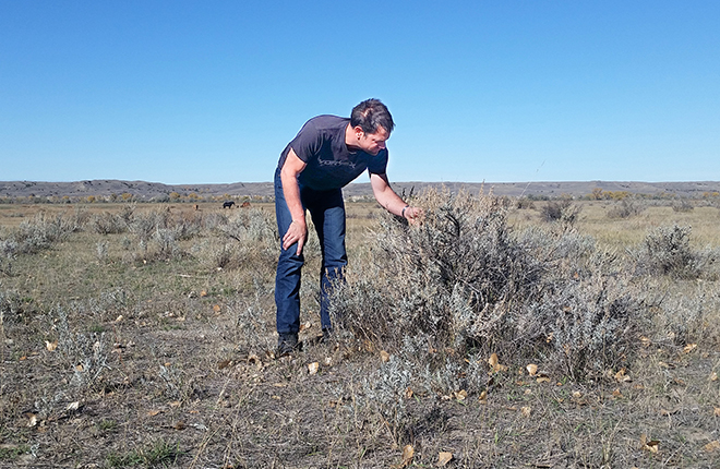 Scientist assessing shrubs on coal mining lands.
