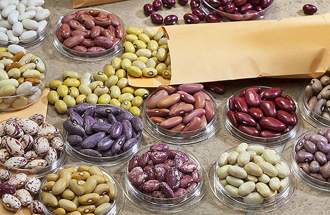 A colorful variety of dry beans.