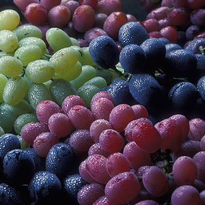 Green, red, and purple grapes