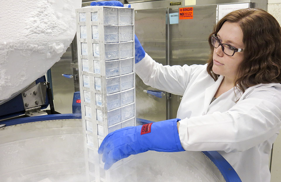 A technician takes samples from liquid-nitrogen freezer