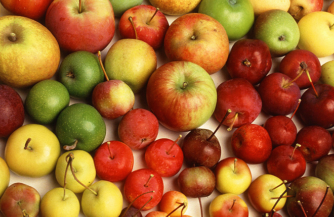 Apples of various colors and size