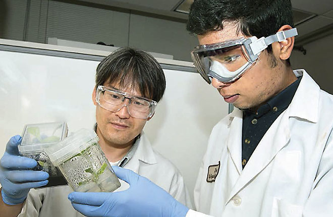Two researchers inspect plants growing in jars
