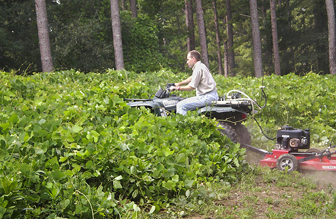 ARS scientist mowing kudzu
