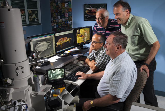 ARS scientists viewing Brevipalpus yothersi using an electron microscope