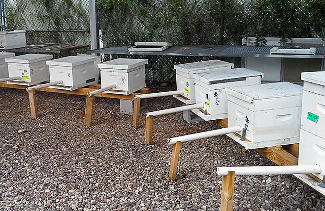 Bee hives with specially designed entrances to capture bees