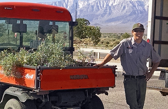 U.S. National Park Service worker next to ARS-donated guayule plants