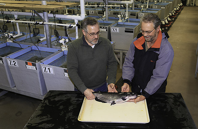 Two ARS scientists inspecting a channel catfish