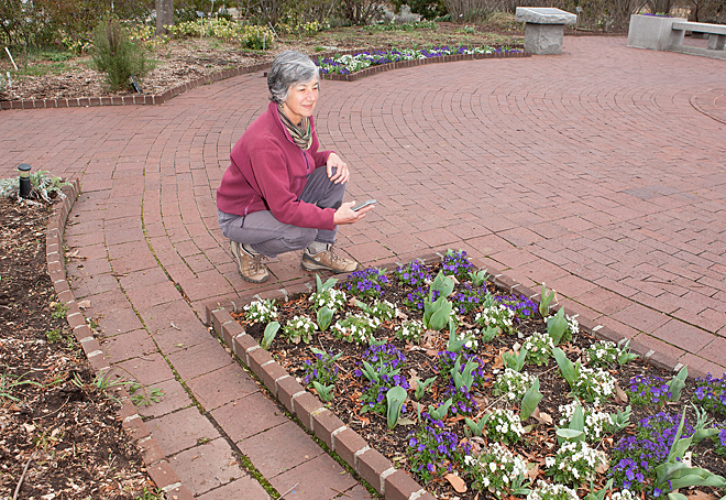 Arboretum volunteer using the app on her phone in the gardens