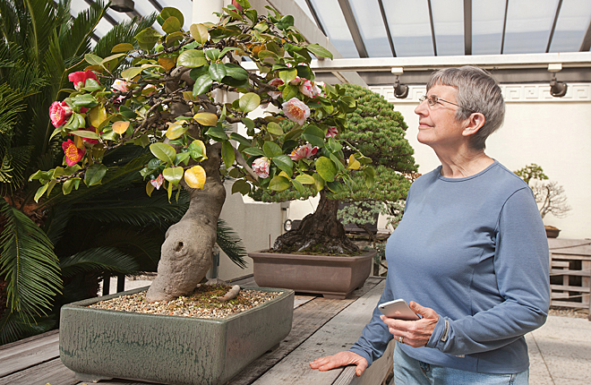Woman using app on her phone in bonsai collection