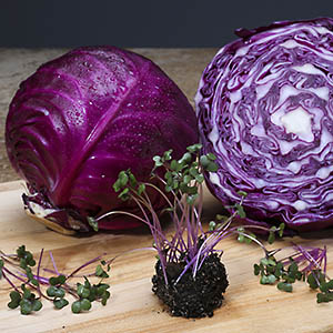 Red cabbage microgreens and mature red cabbage