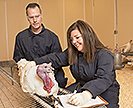 ARS microbiologists examine a turkey